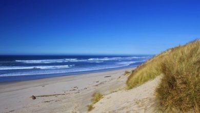 Photo of Tag på stranden med familien for at finde rav